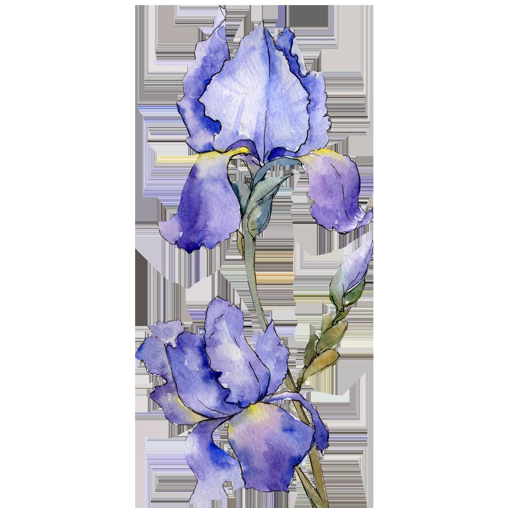 iris-ratowsky-flower-1000